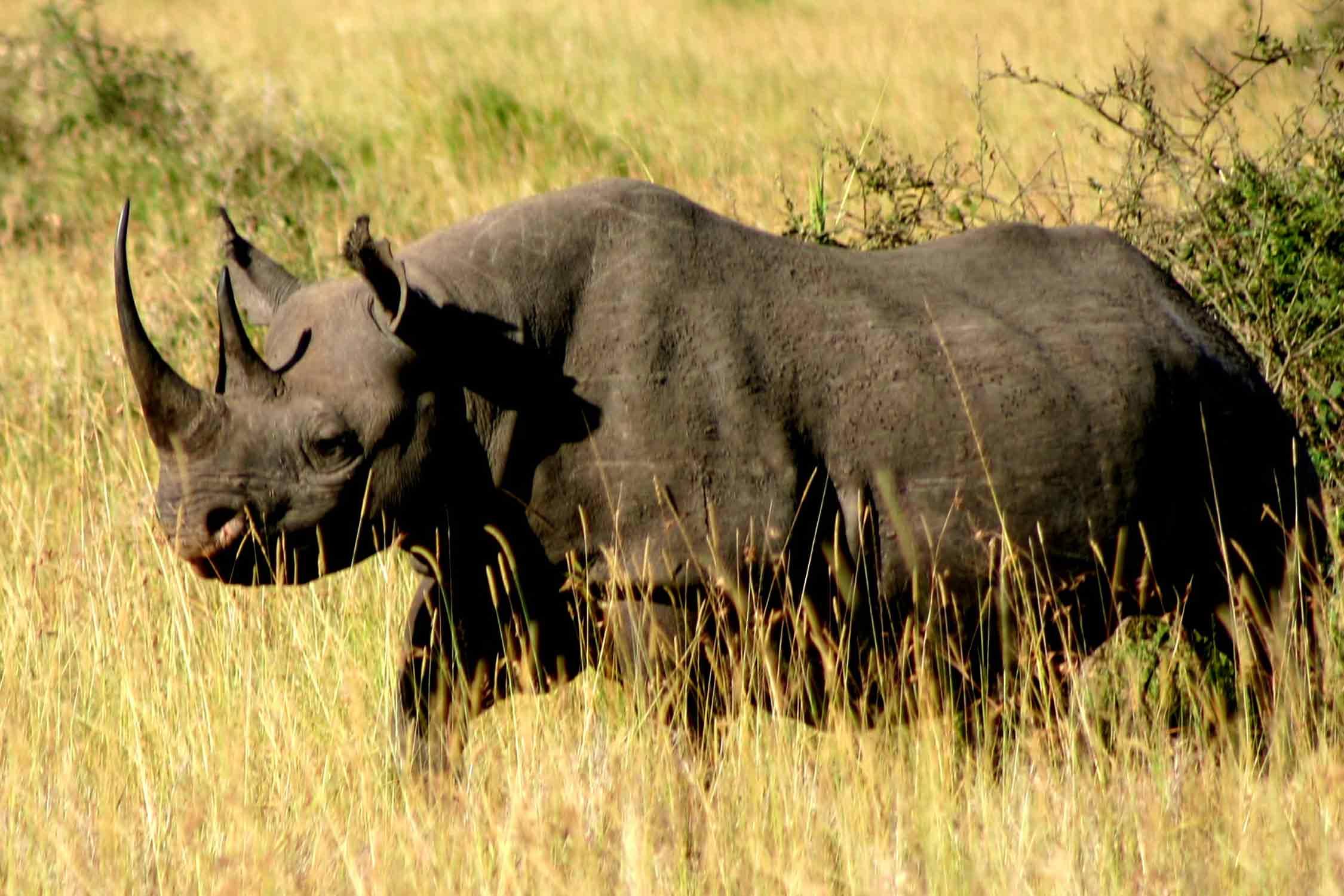Hunting Rhinos